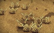 A herd of Beefalos