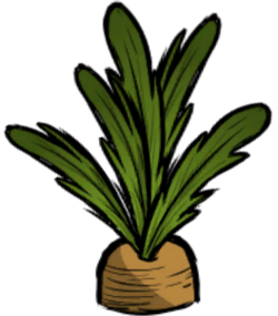 Carrot Plant.png