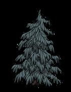 Lumpy Evergreen
