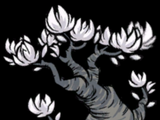 Lune Tree