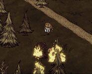 Gobbler spreading fire