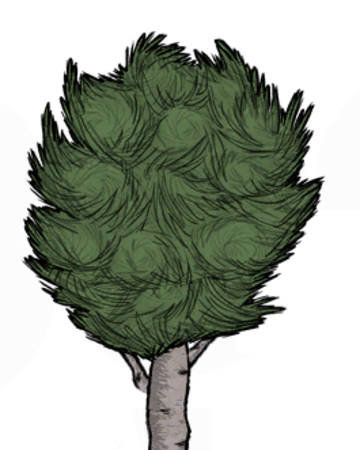 Birchnut Tree Don T Starve Wiki Fandom