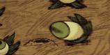 Eyeplant attacking Rabbit Hole