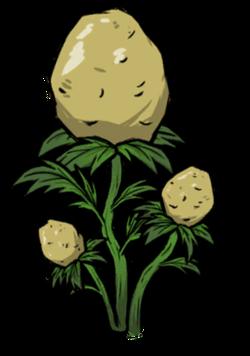 Potato Plant.png