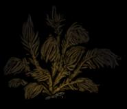 Peagawk bush dead
