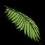 Folha de Coqueiro (Palm Leaf).png
