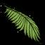 Folha de Coqueiro (Palm Leaf)