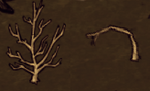 Sapling on the ground normal- wasted