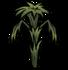 Pepper plant rot