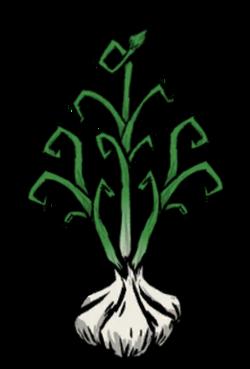 Garlic Plant.png