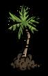 Palm Tree Sapling