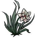 Magic Flower.png
