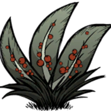 Berry Bush | Don't Starve Wiki | Fandom