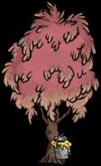 Sugarwood Tree Tapped Full