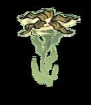 Seaweed Plant