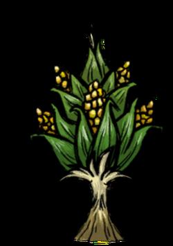 Corn Stalk.png