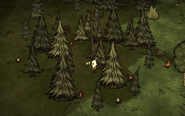 Totally Normal Tree grove