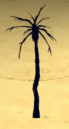 Burnt Palm Tree