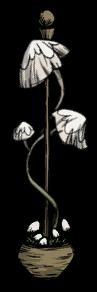 Pilzlampe