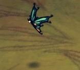 Schmetterling aus SW