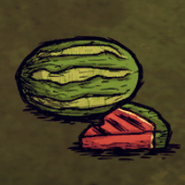Melone-Hauptbild