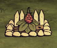 Farm mit Drachenfrucht