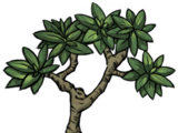 Mangrovenbaum