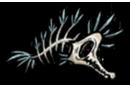 Meeresknochen