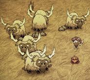Gescherte Büffel