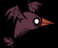 Misshapen Bird