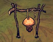 Мёртвая медуза на сушилке