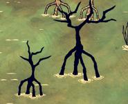 Сгоревшие мангровые деревья