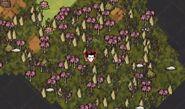RainforestTurfMap