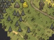 Лес на карте