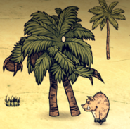 Palm fight