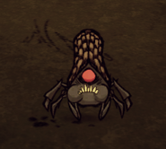 Cave Spider Eating