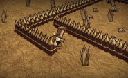 Bones Trap 1