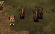 Чумная трава в игре
