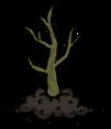 Tea Tree Sapling