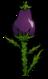 Баклажан растение.png