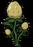 Картофель растение.png