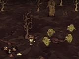 Đất Đầm Lầy