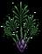 Спаржа растение.png