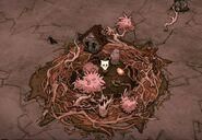 Уилсон и гнездо
