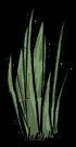 Трава растение SW