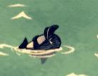 Спящий бутылконосный бальфин