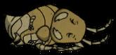 Mant Sleeping