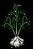 Чеснок растение.png
