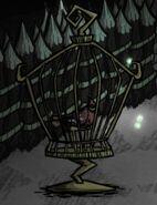 Sleeping caged redbird