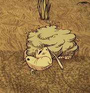 Слизовца спит